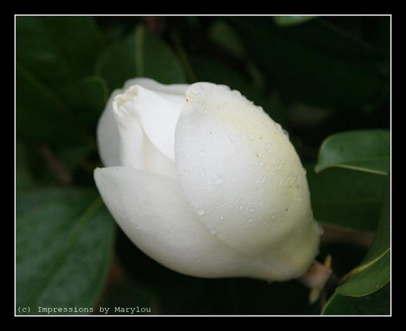 mama's flowers 10