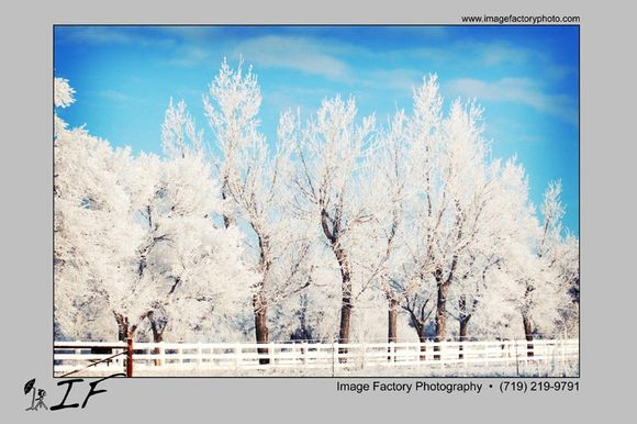 frostytrees